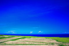 Beautiful grass and Pacific ocean Stock Photo