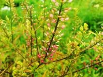 Beautiful grass stock image