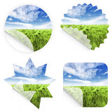 Beautiful grass stickers Stock Image