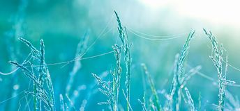 Beautiful grass with water drops. Shallow depth of field Stock Photos