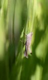 Beautiful grasshopper on a green branch Stock Images
