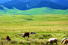 Beautiful grassland Stock Photo