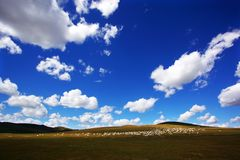Beautiful grassland Stock Photos