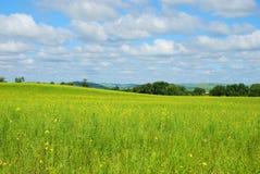 Beautiful grassland Stock Image