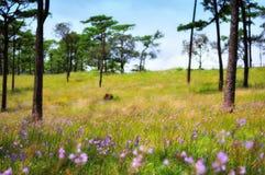 Beautiful grassland Royalty Free Stock Photos
