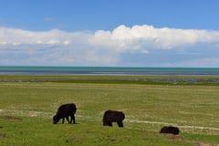 Beautiful grassland Stock Photography