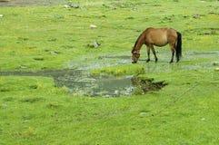 Beautiful grassland. Charming and beautiful grassland, is a beautiful area royalty free stock image