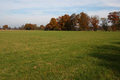 Beautiful grassland in fall Stock Images