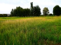 Free Beautiful Grassland In The City Royalty Free Stock Image - 192651476