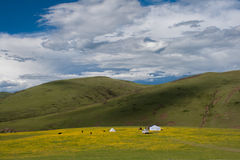 A beautiful grassland landscape in Tibet, China Stock Photo