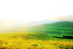 The beautiful grassland(23) Royalty Free Stock Photos