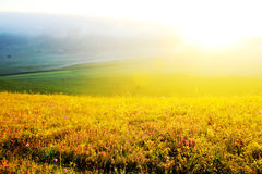 The beautiful grassland(30) Stock Image