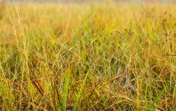 Beautiful grassland in winter. Stock Image