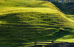 Beautiful grassy hillside in sunlight Royalty Free Stock Image