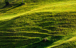 Beautiful grassy hillside in sunlight Royalty Free Stock Photo