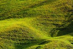 Beautiful grassy hillside in sunlight Stock Photos