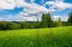 Beautiful grassy meadow in summer. Spruce trees and wooden fence on the edge of a hill. beautiful countryside beneath a wonderful sky with cloud formations Royalty Free Stock Photos