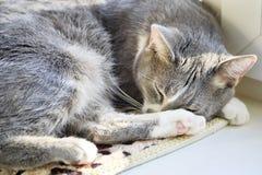 Beautiful gray cat close-up sleeping on a white windowsill stock photos