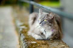 Beautiful gray cat by a doorstep Stock Photo