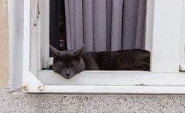 Beautiful gray cat napping on a wooden  window sill. Close up Royalty Free Stock Images