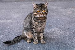 Street cat stock image