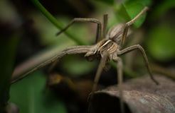 Beautiful gray garden spider stock images