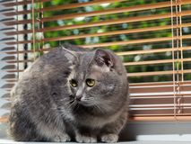 A beautiful gray green-eyed cat with black and white stripes lies on the windowsill and looks a little away from the camera. royalty free stock photos