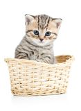 Beautiful gray kitten in basket isolated on white Stock Photo