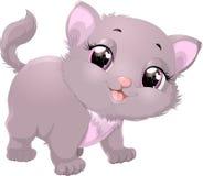 Beautiful gray kitten Stock Photos