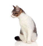 Beautiful gray and white cat Stock Photo