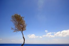 Beautiful greece, wonderful island and sea. Tree on wonderful island Stock Photography