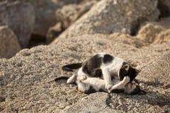 Beautiful greek cats Stock Image
