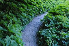 Beautiful green arboretum in the park Sofiyivka stock photo