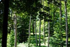 Beautiful green arboretum in the park Sofiyivka royalty free stock image