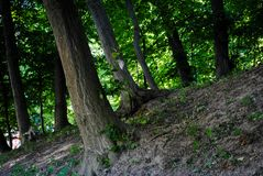 Beautiful green arboretum in the park Sofiyivka royalty free stock photos