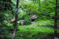 Beautiful green arboretum in the park Sofiyivka stock photography
