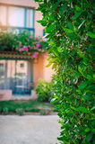 Beautiful green arch with decorative tree at the hotel Royalty Free Stock Photography