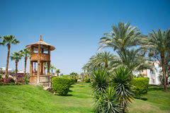 Beautiful green area of the hotel with palm trees.  royalty free stock photos