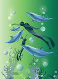 Beautiful green background with diver swimming and dolphins Stock Photo