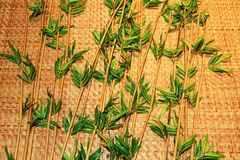 Beautiful green bamboo Stock Photo