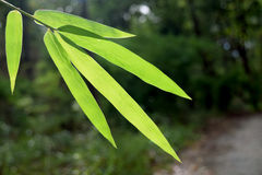 Beautiful green bamboo leaves in a jungle close-up stock photos