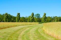 Beautiful green barley field in summer time Stock Photo