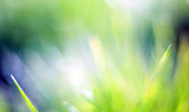 Beautiful green bokeh background Royalty Free Stock Image