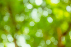 Beautiful green bokeh background Stock Images