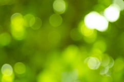 Beautiful green bokeh Stock Image