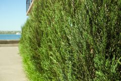 Beautiful green bush. On the street. e view stock photos