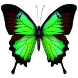 Beautiful green butterfly Stock Photos