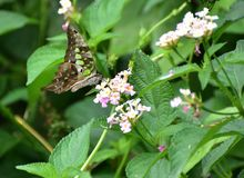 Beautiful green butterfly royalty free stock photography