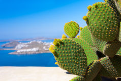 Beautiful green cactus on a background of blue sea on the island Royalty Free Stock Photography