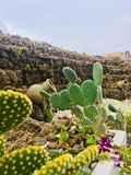 Beautiful green cactus flower royalty free stock photography
